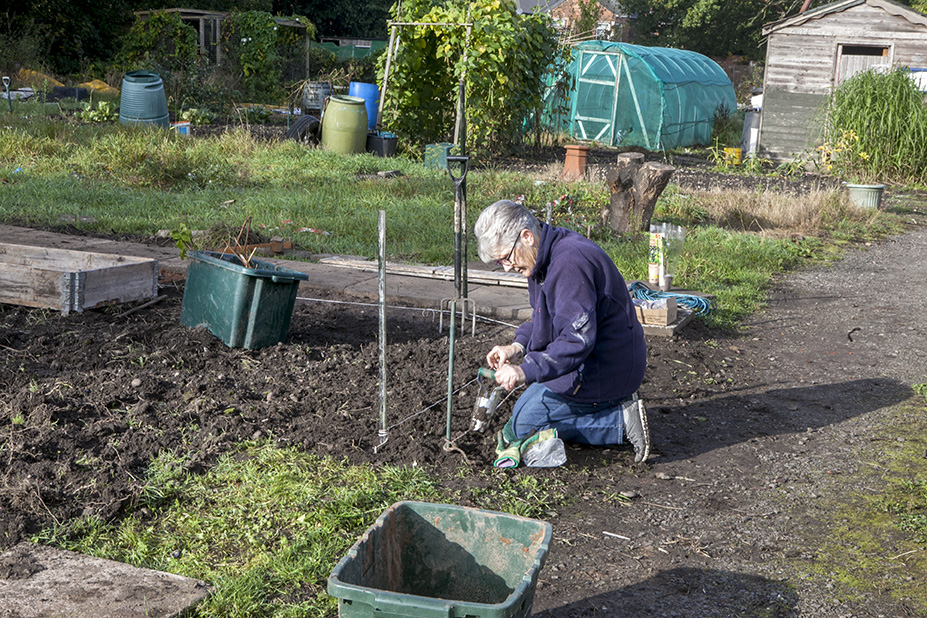 Jean planting spring bulbs on the New Shoots Gardening Club plot, St Margarets Road Site