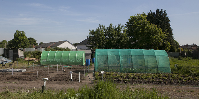 St Margarets Rd Allotment Site revival