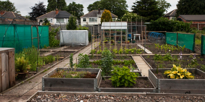 National Allotments Week!