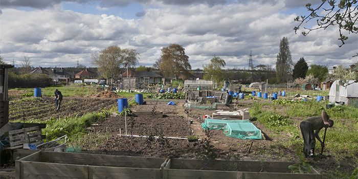 Your allotment needs you and you need your allotment!
